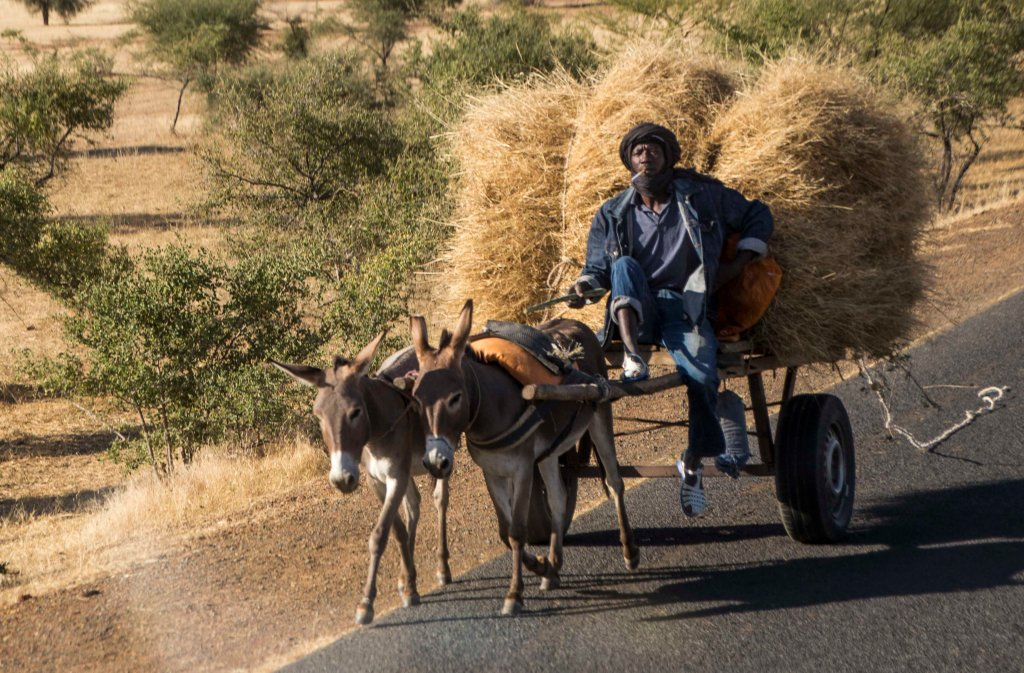 Double header donkey cart