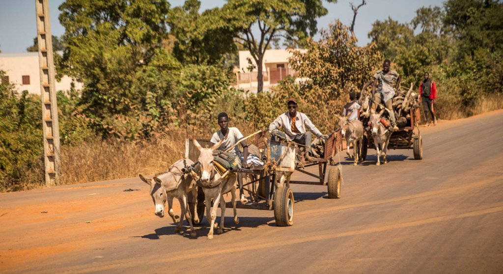 Donkey cart rush hour
