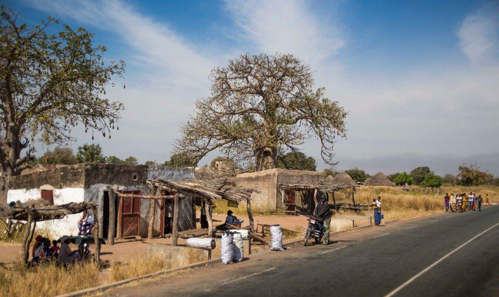 Village under a baobab