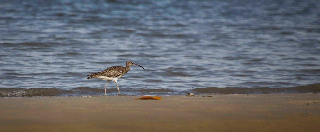 Seabird on the sea shore