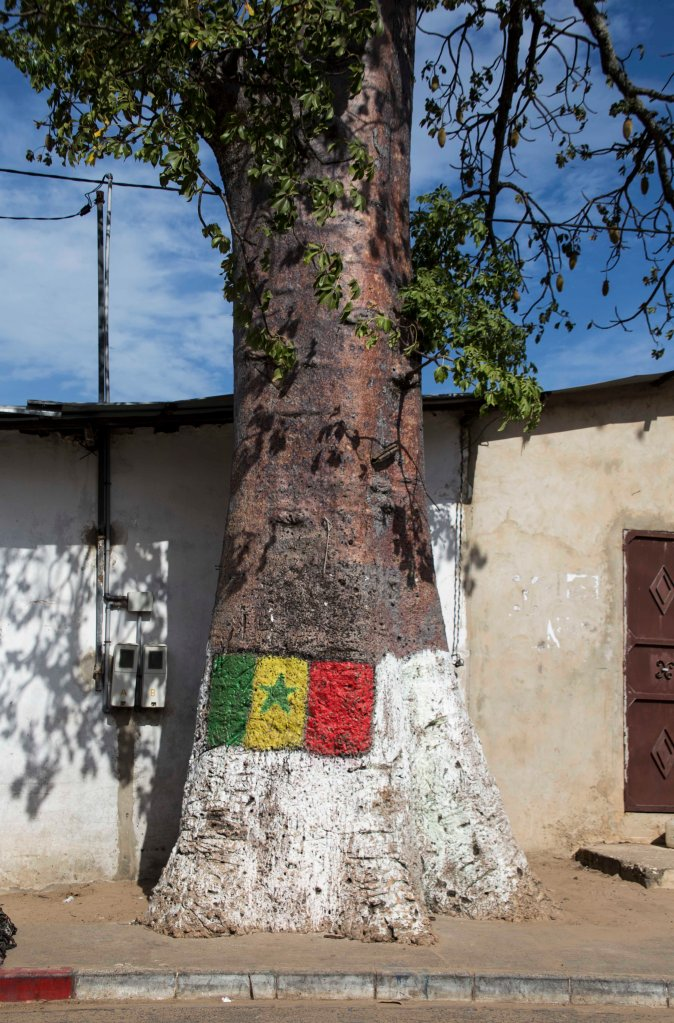 Senegalese flag on a tree