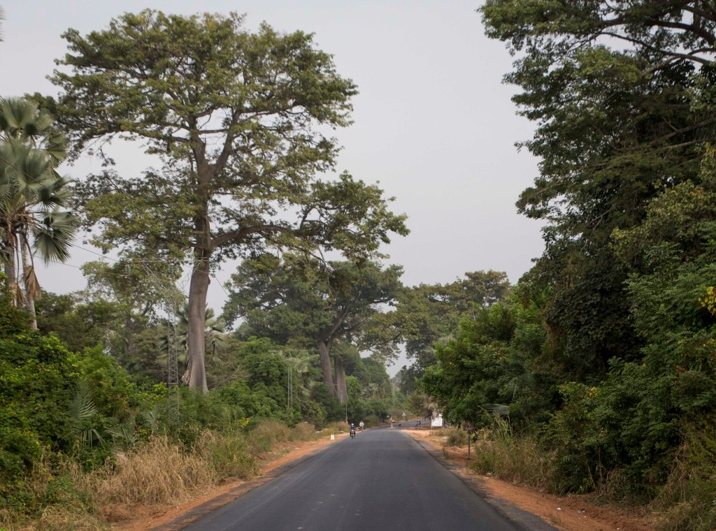 Senegalese jungle headed for Guinea Bissau