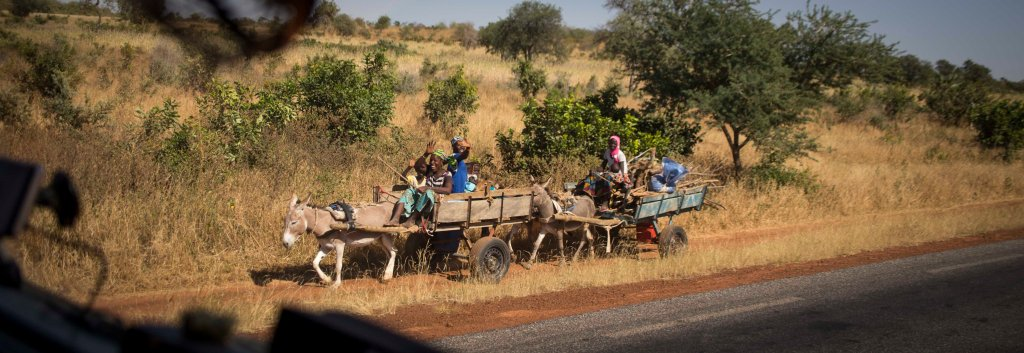 Donkey carts on their way to market