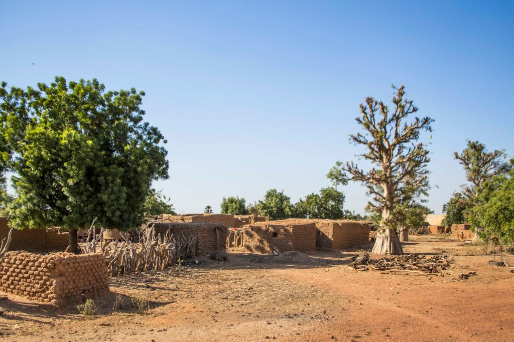 Baobab in Malian mud village