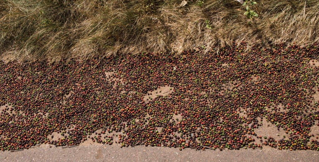Coffee beans roadside