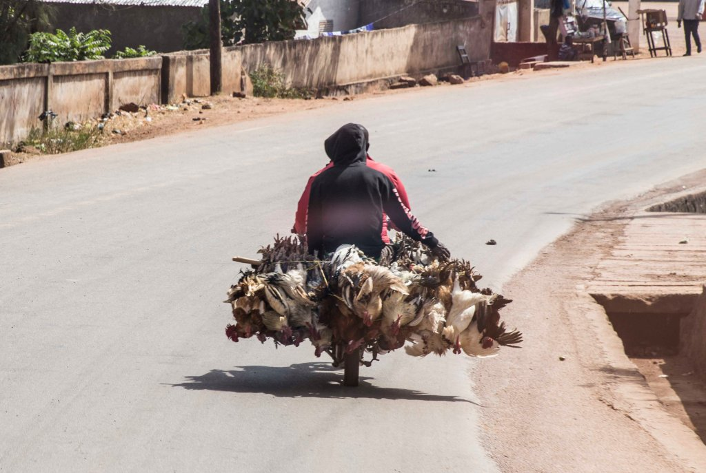 Chickens on their way to market